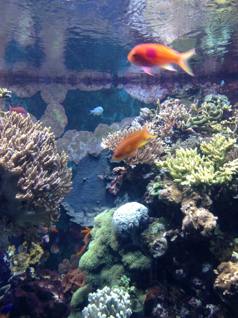 fish swimming in coral tank