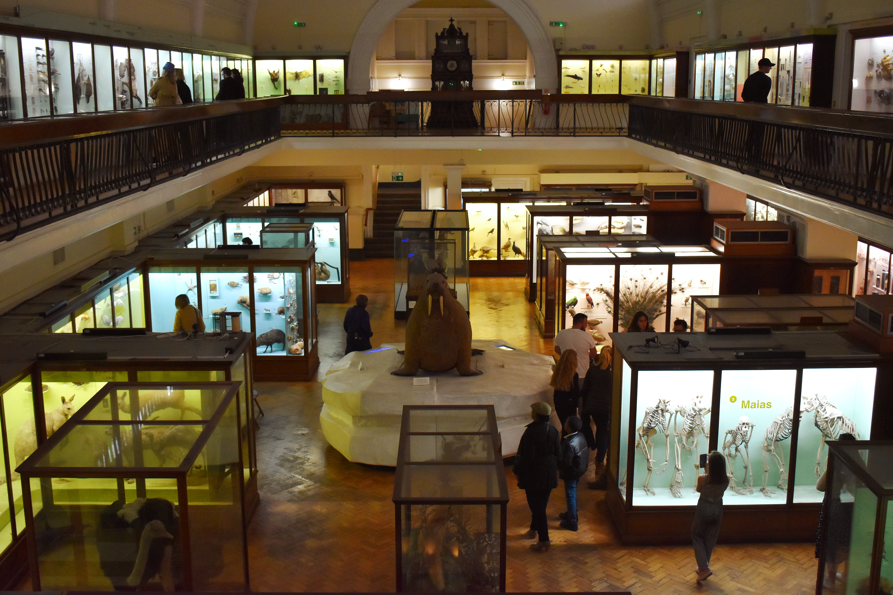 view of a natural history gallery in a museum