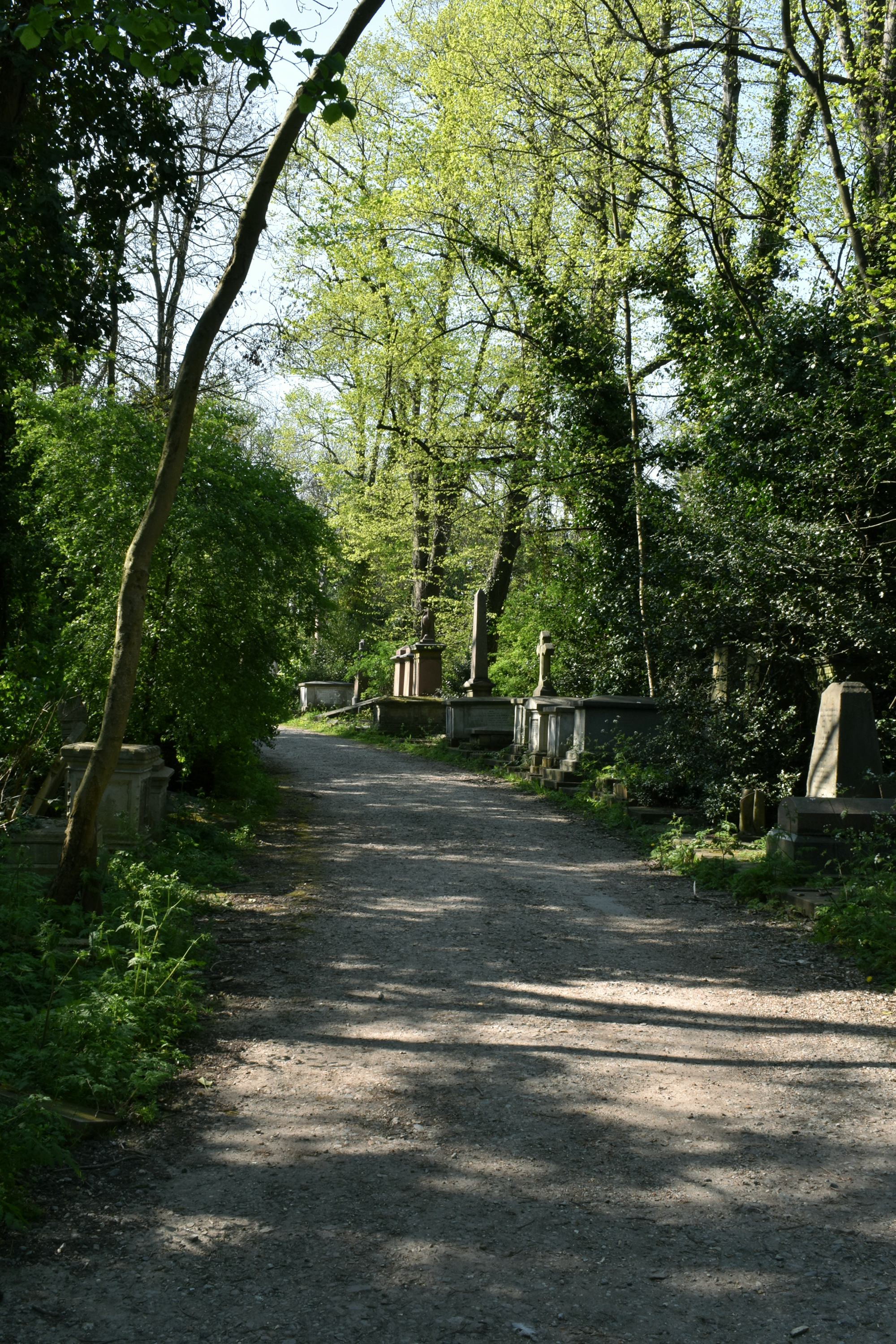 cemetery in the sunlight with path through woods